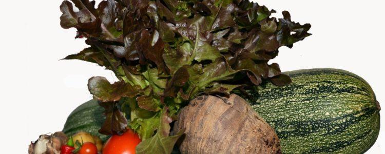 Bio-Lebensmittel – warum gerade bei Hashimoto?