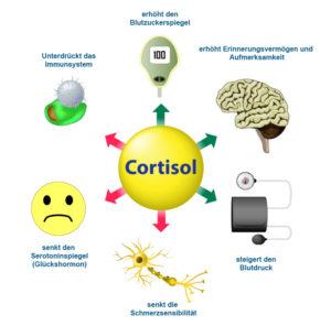 Serotonin im Zusammenspiel mit Cortisol