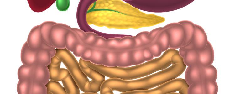 Warum kann die Darmtherapie deine Symptome lindern bzw. ganz verschwinden lassen?