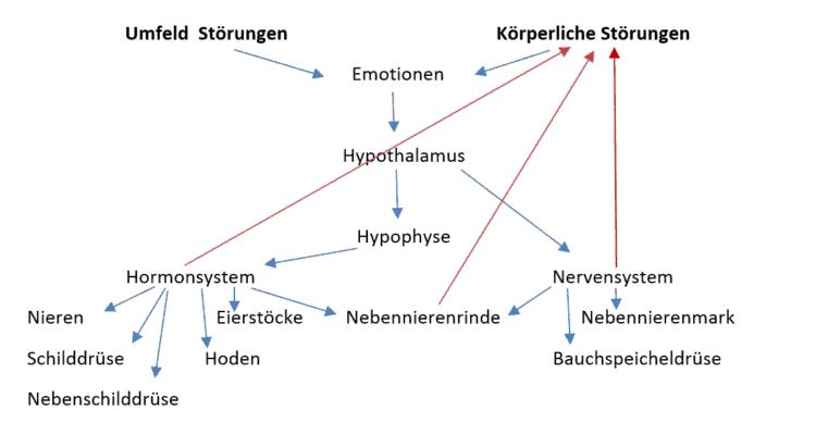 Hormon dysbalance 2